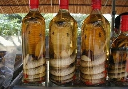 Snake in the bottle snake wine